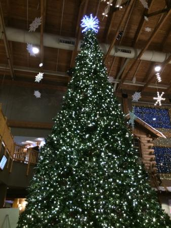 Huge Christmas Tree Snowland Picture Of Great Wolf Lodge