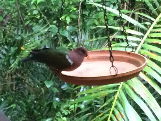 Atherton, Australië: Birdfeeder on balcony