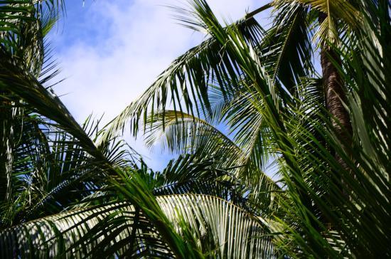 แชงกรีลาส์ วิลลิงกีลี รีสอร์ท แอนด์ สปา: Coconut Palms