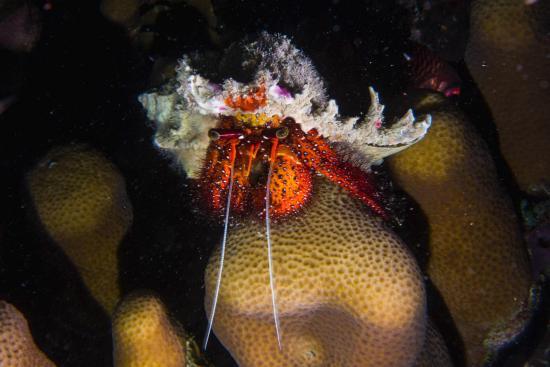 Kinasi Lodge: Hermit Crab