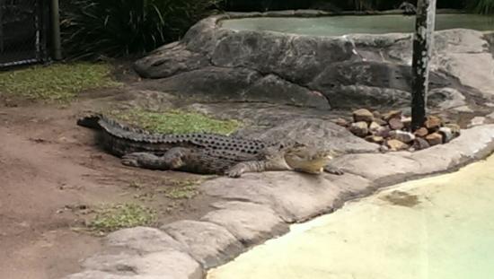 Australia Zoo照片
