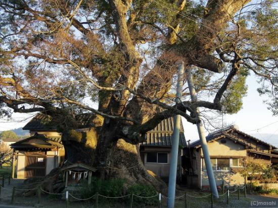 Kakurega no Mori