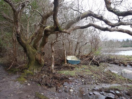 Crookhaven, Irlanda: Garden