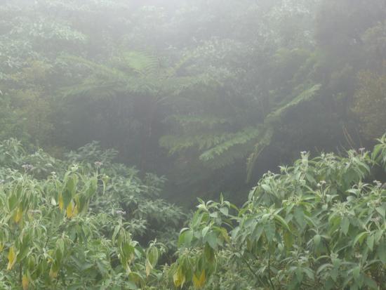 Queimadas Forest Park