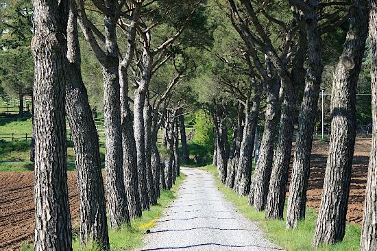 Castel Giorgio, Italia: viale ingresso alla Tenuta