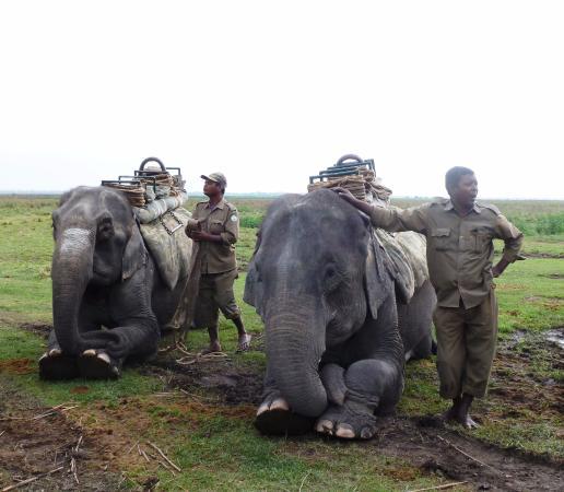 Nature Hunt Eco Camp, Kaziranga National Park: Elephant Safari