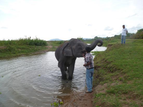 Nature Hunt Eco Camp, Kaziranga: Elephant Safari