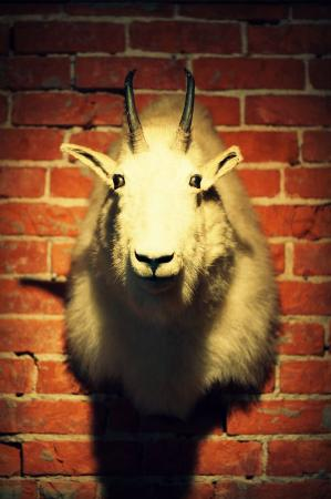 North East, PA: Billy Goat