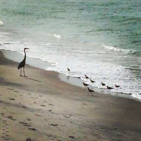 Pearl Beach Inn: Beautiful birds along the shore