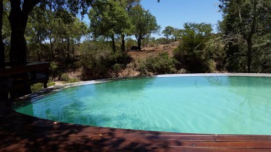 Imbali Safari Lodge: Piscina a sfioro