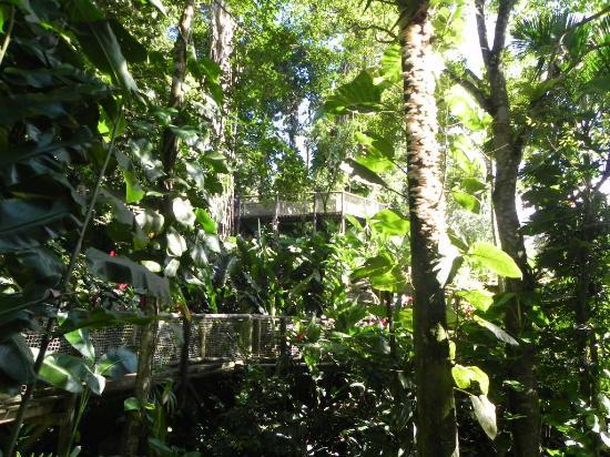 Parc des Mamelles, le Zoo de Guadeloupe: Parc des Mamelles