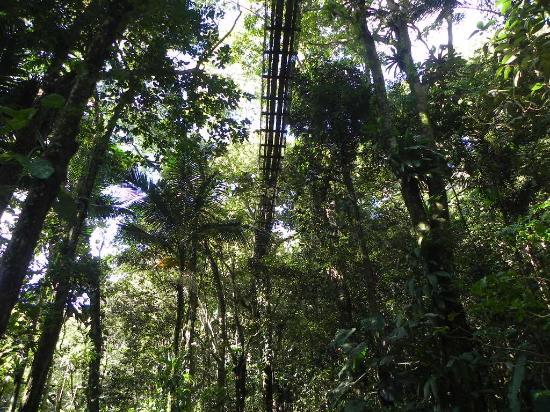 Parc des Mamelles, le Zoo de Guadeloupe: Passerelle sous la canopée