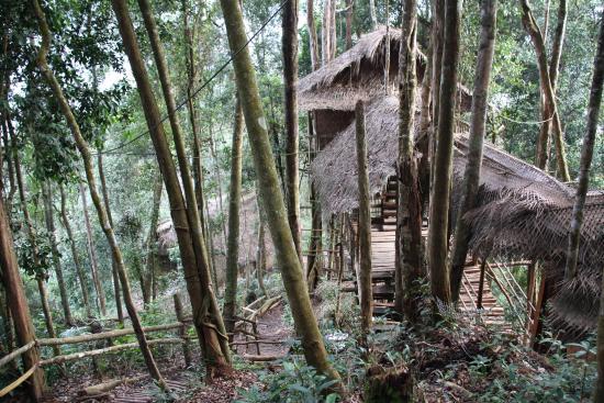 Terra's Tree House