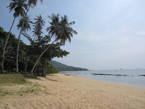 Pine Bungalow: Вид на пляж