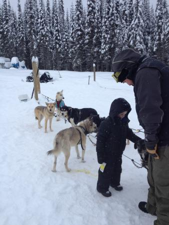 Sun Peaks, Kanada: Getting Aquainted with the dogs