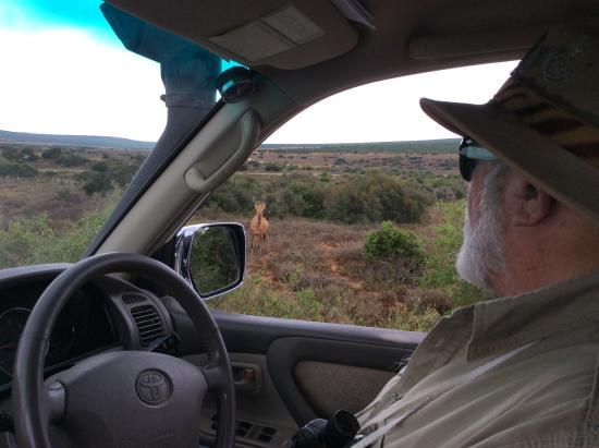 Sunland, Sudáfrica: Safari