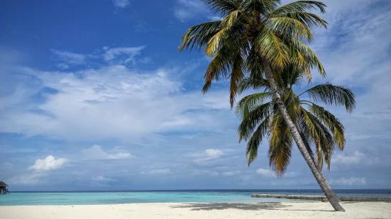 Maafushivaru: Vue plage depuis la piscine