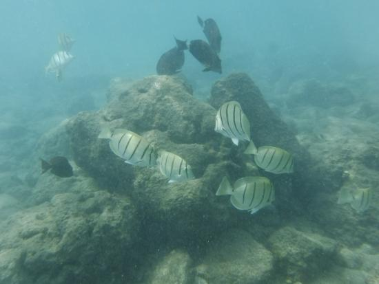 Hanauma Bay Nature Preserve: Fish by the coral reef