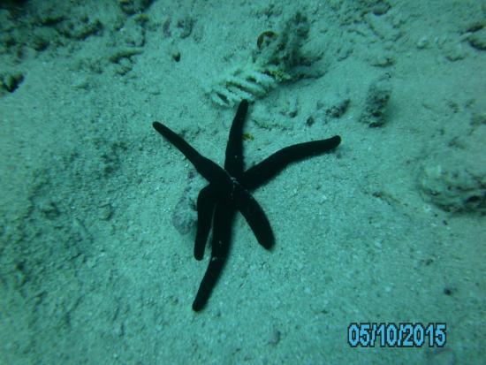 Острова Ломаивити, Фиджи: Tauchen