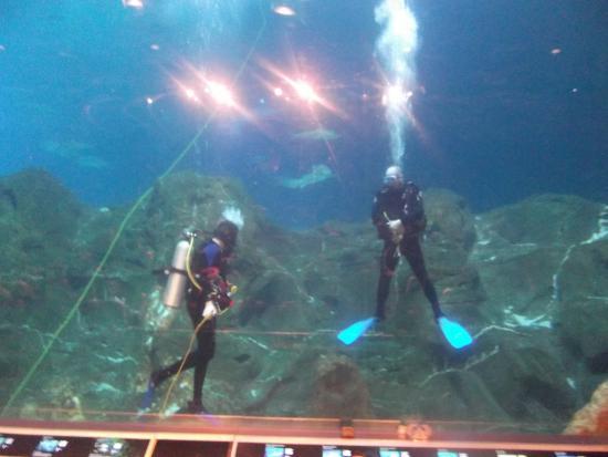 Adventure Aquarium: show