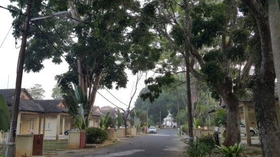 Rumbia Resort Paka : Resort 내 수목은 울창함!