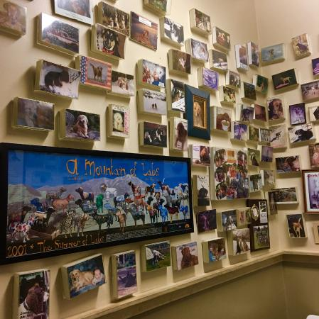 Rico's Authentic Italian: The restroom walls have many dog photos and posters.