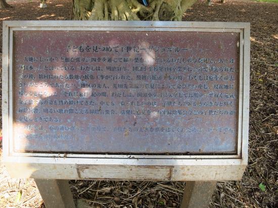 大島郡和泊町, 鹿児島県, 一世紀ガジュマル