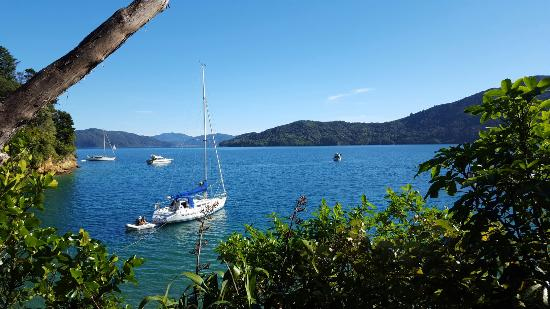 Queen Charlotte Track: 20160106_173740_large.jpg