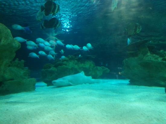 Beijing Gongti Richina Underwater World(Blue Zoo Beijing) : look into the main tank