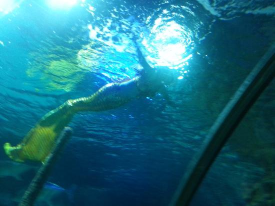 Beijing Gongti Richina Underwater World(Blue Zoo Beijing) : mermaids!!!
