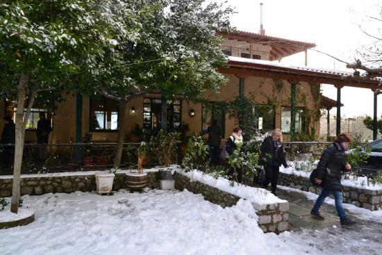 Hani Zemenou: Neve all'uscita