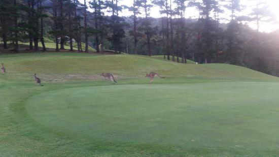 Kangaroo Valley Golf