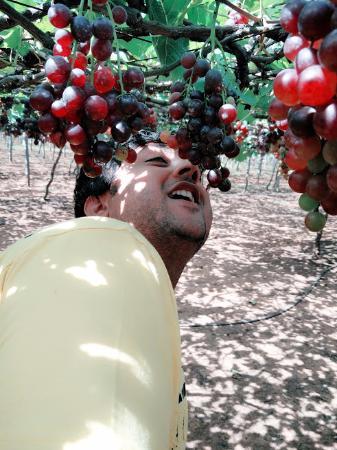Periyar National Park: grape farm