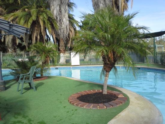 Pool Picture Of Desert Palms Alice Springs Alice Springs Tripadvisor