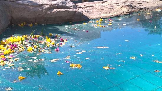 Continental Garden Reef Resort: pulizia della piscina