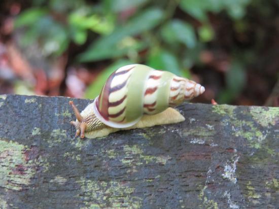 Beautiful Snail On The Handrail