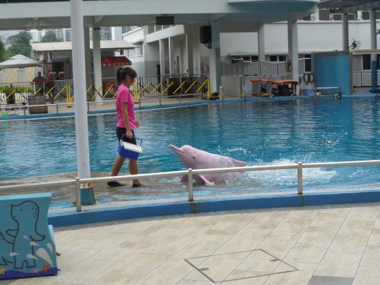 Gogreen Segway Eco Adventure : pink dolphins