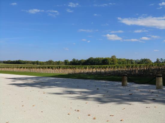 Margaux, Francia: ブドウ畑