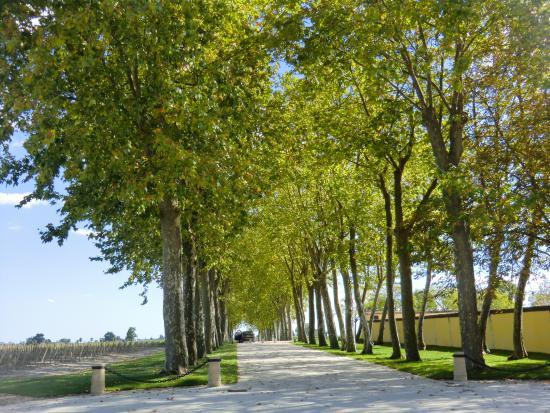 Margaux, Francia: 並木道