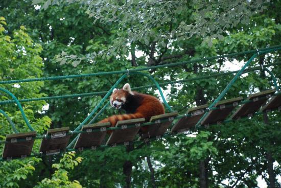 フラミンゴ - Picture of Asahiyama Zoo, Asahikawa - TripAdvisor