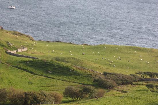 Clifden Castle: Blick aufs Meer