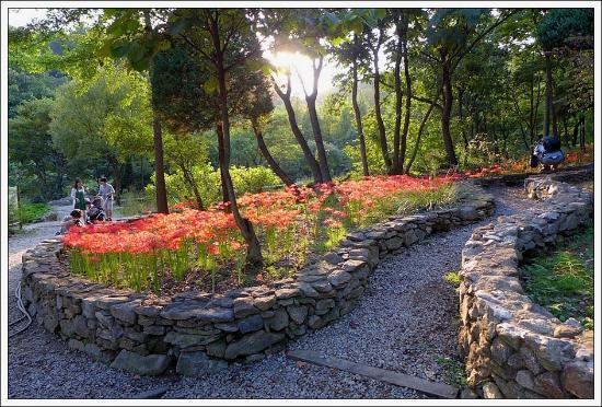Singu Daehak Arboretum照片