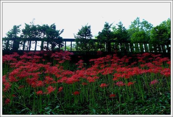 Singu Daehak Arboretum