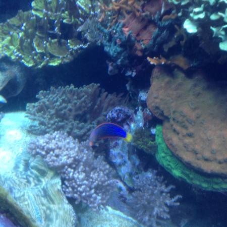 Sea World Aquarium Picture Of Seaworld Orlando Orlando
