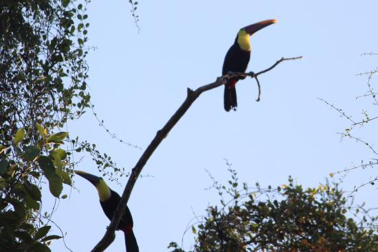 Hotel California: Amazing birds
