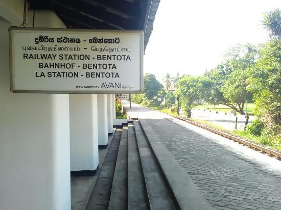 Bentota, Sri Lanka: IMG_20160107_043514_large.jpg