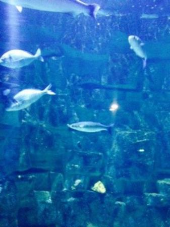 Aquarium - Foto di Aquarium de La Rochelle, La Rochelle - TripAdvisor
