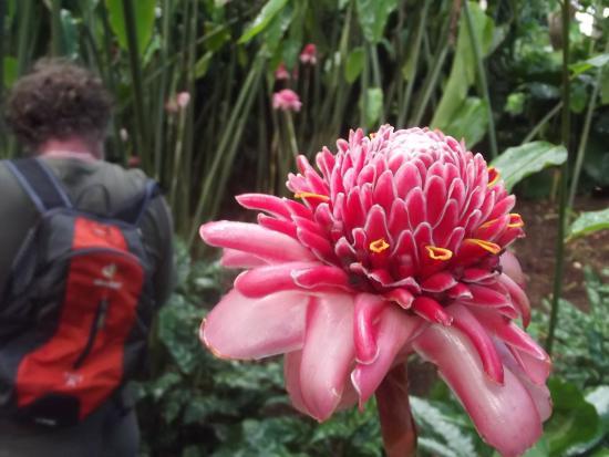 Magnifique Fleur Picture Of Jardin Botanique De Deshaies Deshaies