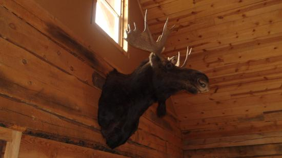 Cherry Creek Mountain Ranch: the moose is watching over you