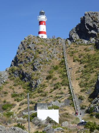 Wairarapa, Nueva Zelanda: 254 steps